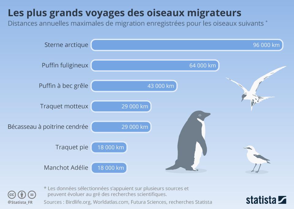 Graphique Les Plus Grands Voyages Des Oiseaux Migrateurs Statista