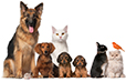 Haustiere & zoologischer Bedarf Statistiken