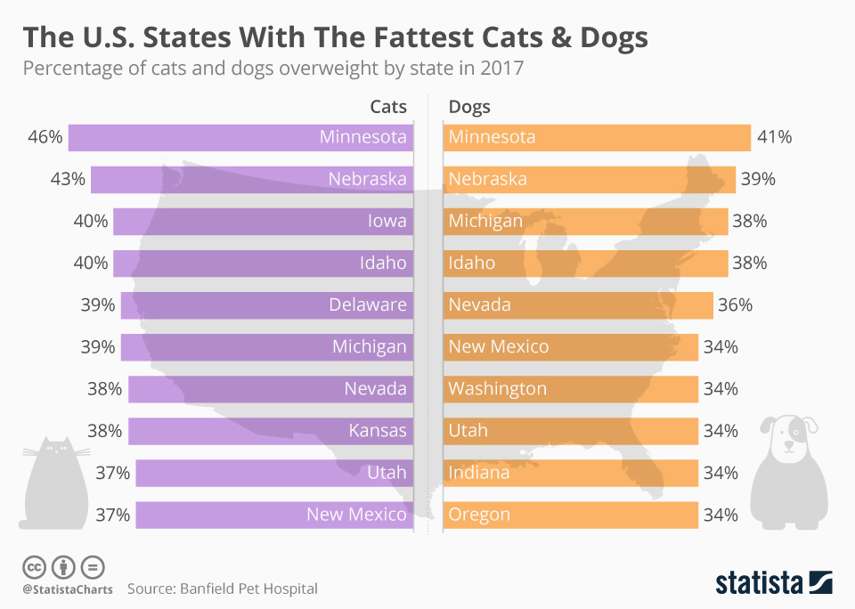 Infographic: The U.S. States With The Fattest Cats & Dogs  | Statista