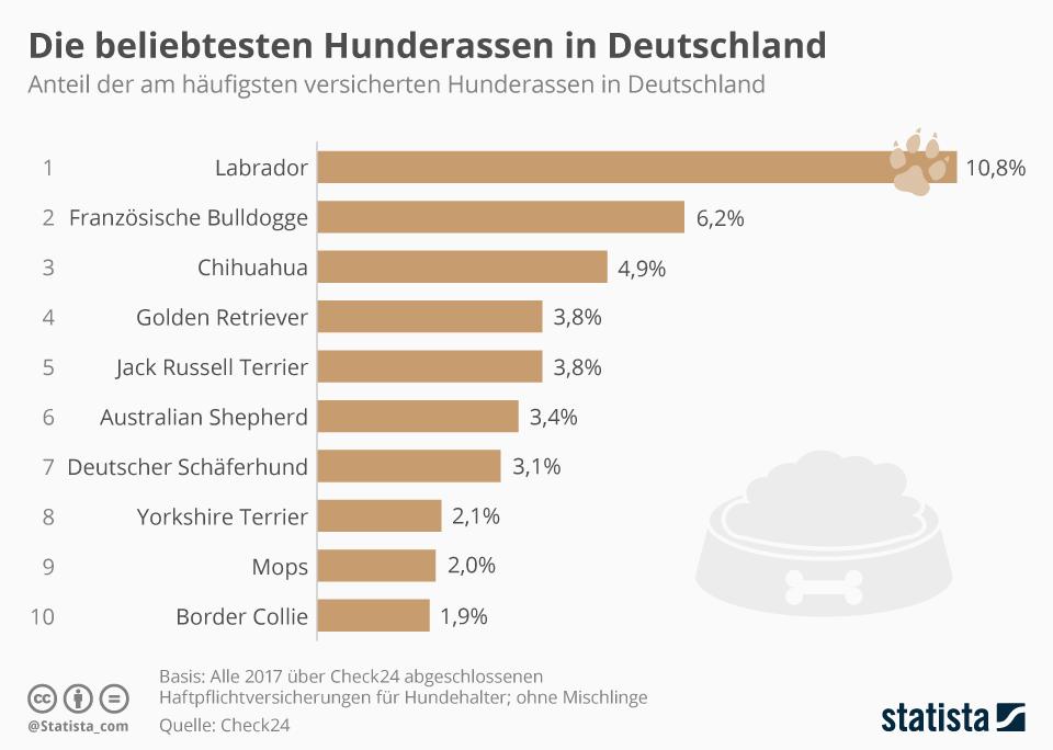 Infografik: Die beliebtesten Hunderassen in Deutschland | Statista