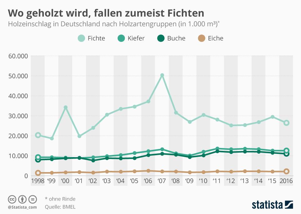 Infografik: Wo geholzt wird, fallen zumeist Fichten | Statista