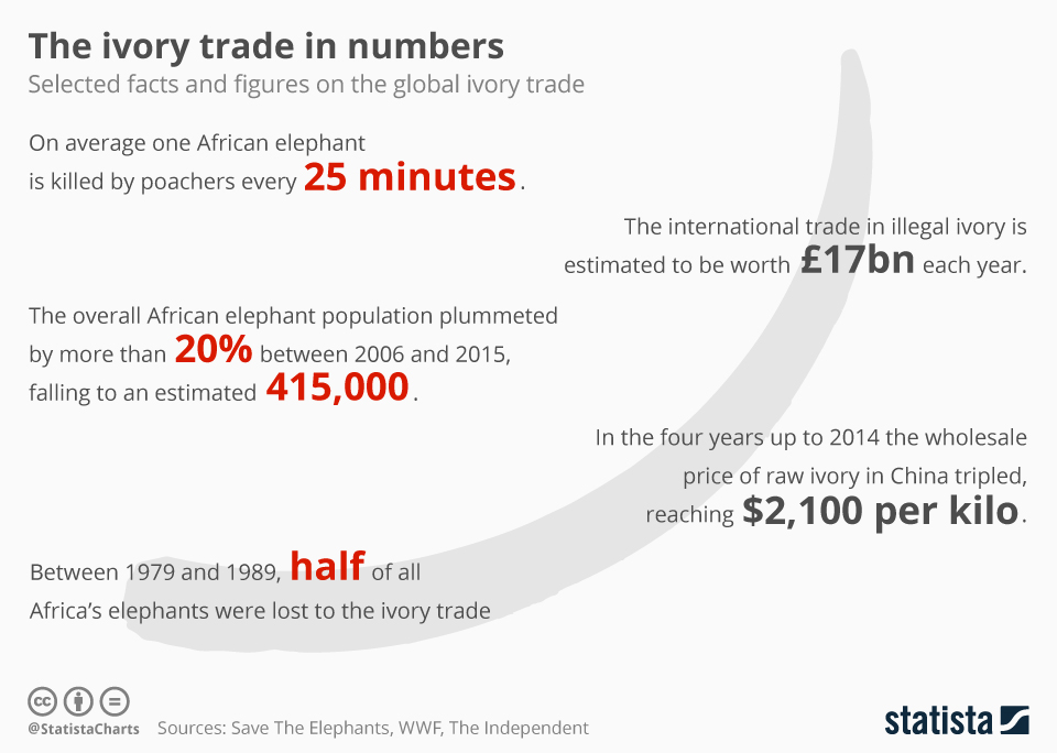 Infographic: The Ivory Trade in Numbers | Statista