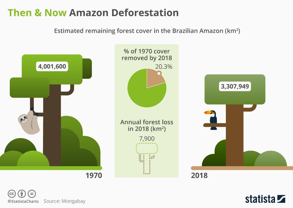 Infographic: Then & Now Amazon Deforestation  | Statista