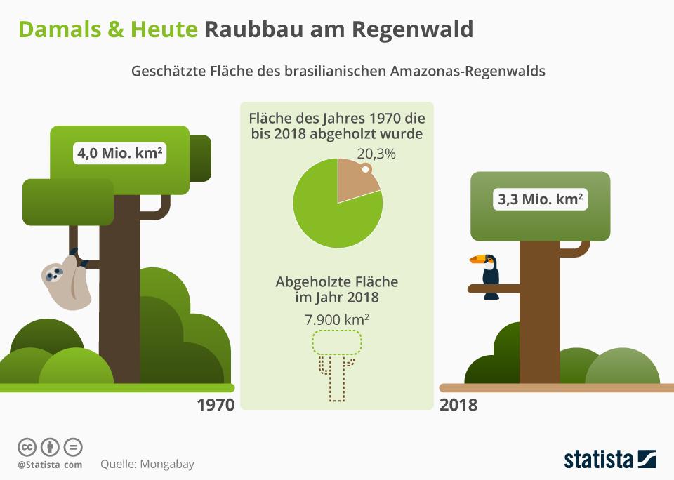 Infografik: Raubbau am Regenwald   Statista