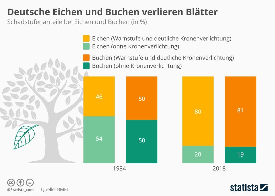 Infografik: Deutsche Eichen und Buchen verlieren Blätter | Statista