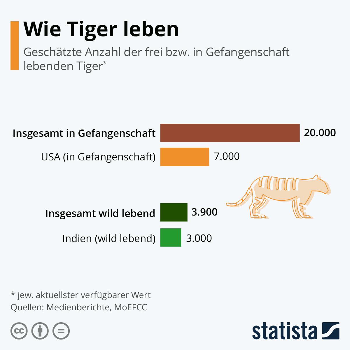 Infografik: Wie Tiger leben | Statista