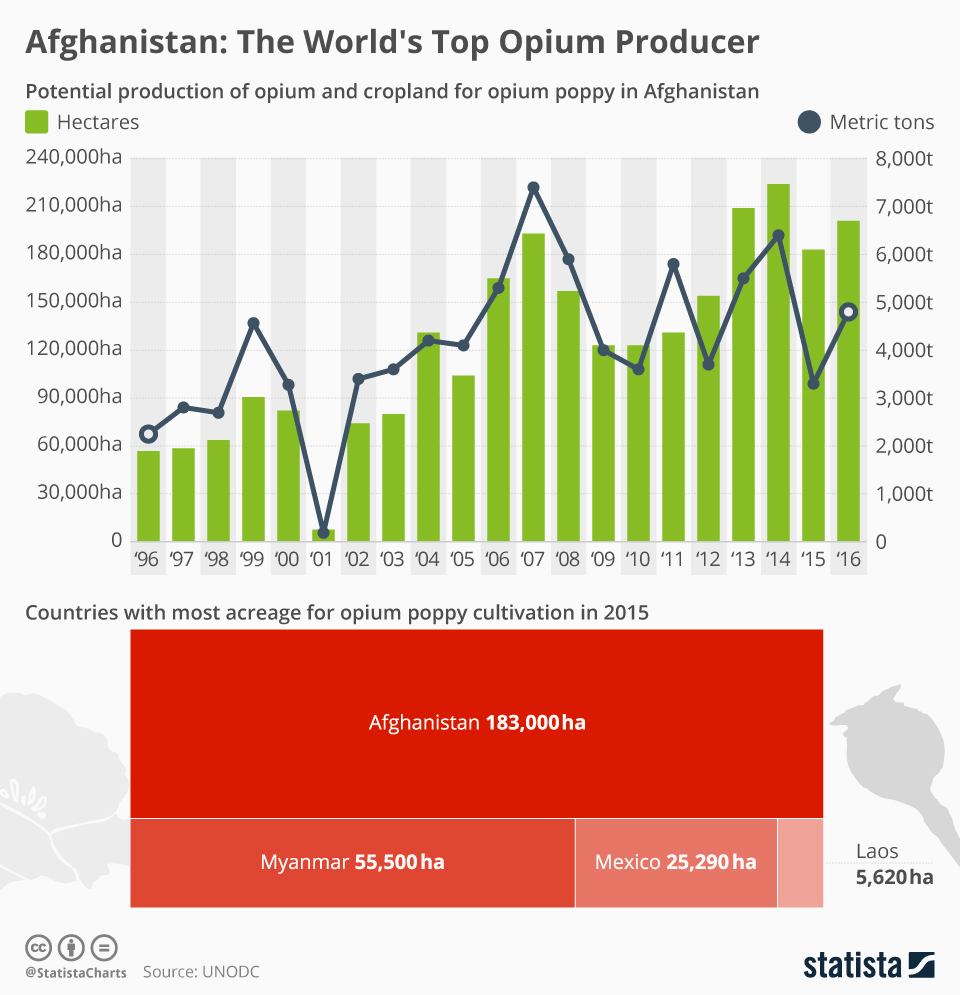 Infographic: Afghanistan's Opium Production Capacity Creeps Back Up   Statista