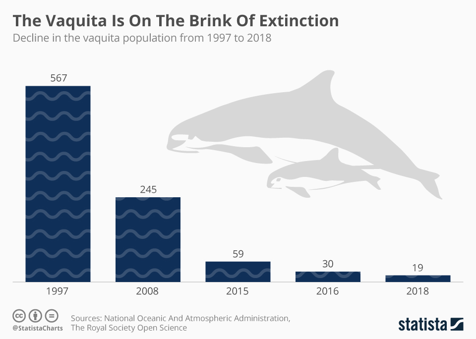 Infographic: The Vaquita Is On The Brink Of Extinction  | Statista