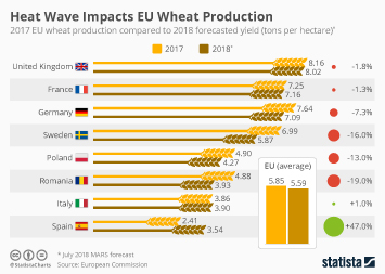 Infographic - EU wheat production compared to forecasted yield