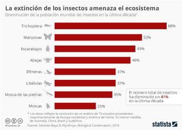 Infografía - Disminución de la población mundial de insectos en una década