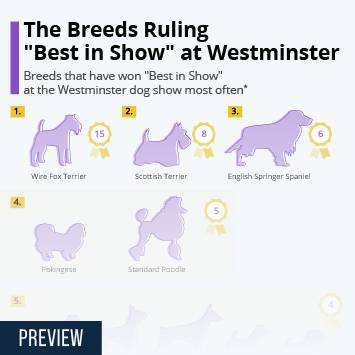 Infographic - breeds winning Westminster dog show most often