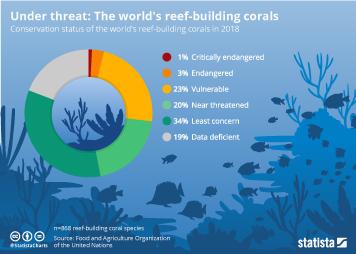 Infographic - reef-building corals under threat