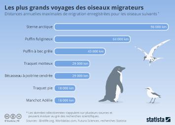 Infographie - Les plus grands voyages des oiseaux migrateurs