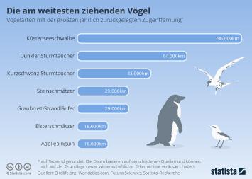 Infografik - Vogelarten mit der größten jährlichen Zugentfernung