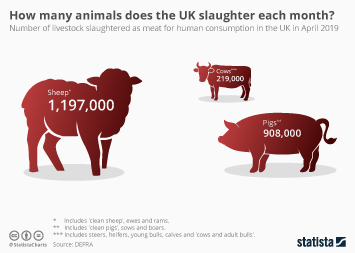 Meat industry in Europe Infographic - How many animals does the UK slaughter each month?