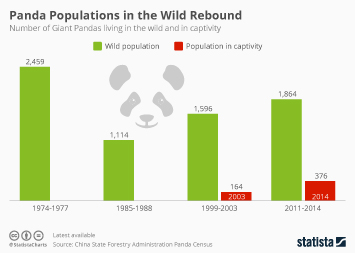 Infographic - panda populations in the wild and in captivity