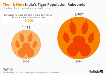 Infographic - umber of wild tigers documented in India