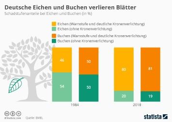 Infografik - Schadstufenanteile bei Buchen und Eichen in Deutschland