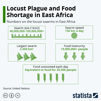 Infographic - locust plague ravaging east africa