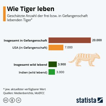 Infografik: Wie Tiger leben   Statista