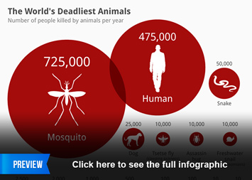 Infographic: The World's Deadliest Animals  | Statista