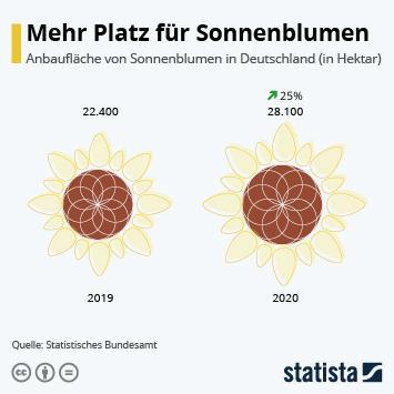 Link zu Mehr Platz für Sonnenblumen Infografik