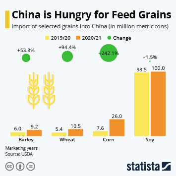 Link to Agriculture in China Infographic - China is Hungry for Feed Grains Infographic