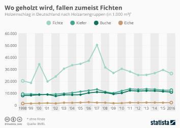 Forst- und Holzwirtschaft Infografik - Wo geholzt wird, fallen zumeist Fichten