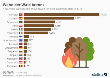 Wenn der Wald brennt