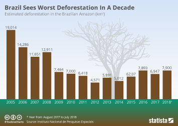 Brazil Infographic - Brazil Sees Worst Deforestation In A Decade