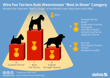 "Wire Fox Terriers Rule Westminster ""Best in Show"" Category"