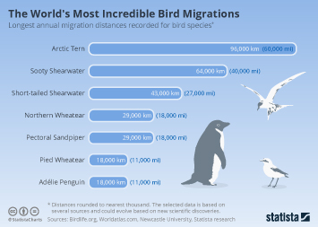 The World's Most Incredible Bird Migrations