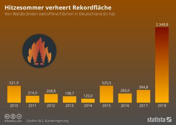 Hitzesommer verheert Rekordfläche