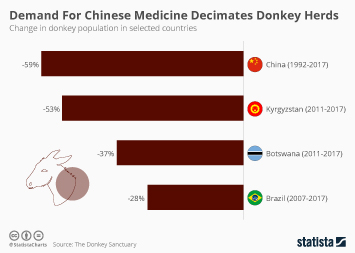 Demand For Chinese Medicine Decimates Donkey Herds
