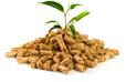 Biomass Energy statistics