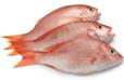 U.S. Fishery Industry statistics