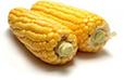 Ökologischer Landbau Statistiken