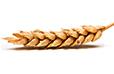 Getreide Statistiken