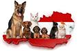 Haustiere in Österreich statistics