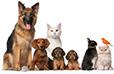 Les Français et les animaux de compagnie statistiques