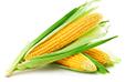 Corn statistics